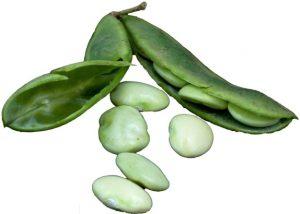 lima-beans-300x214